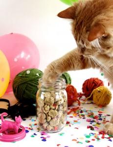 crunchy-cat-treats-DS41