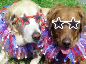 July 4 dogs