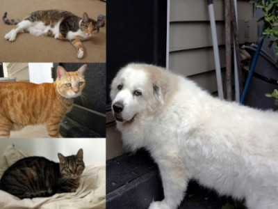 Oct 2014 Pets of the Month