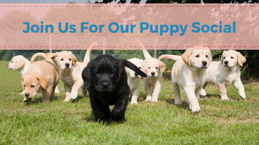 Join Us For Our Puppy Social!