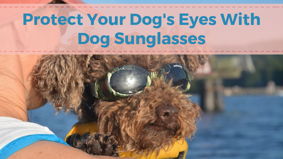 Protect Your Dog's Eyes With Dog Sunglasses