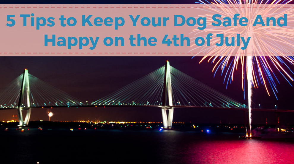 5 Tips to Keep Your Dog Safe & Happy on the 4th of July
