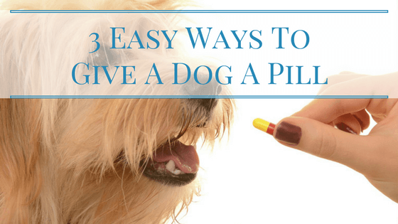 3 Easy Ways To Give A Dog A Pill