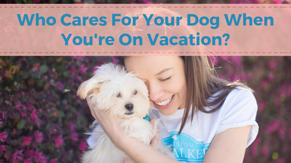 Who Cares For Your Dog When You're On Vacation?