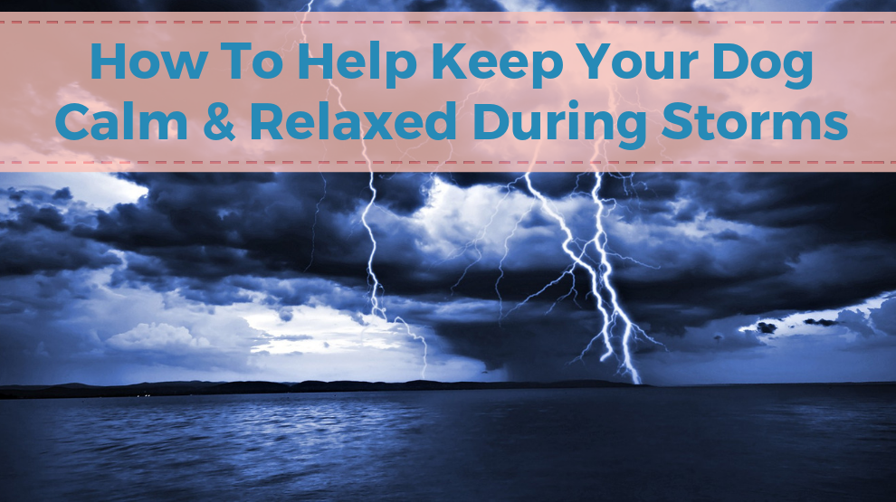 How To Help Keep Your Dog Calm And Relaxed During Storms