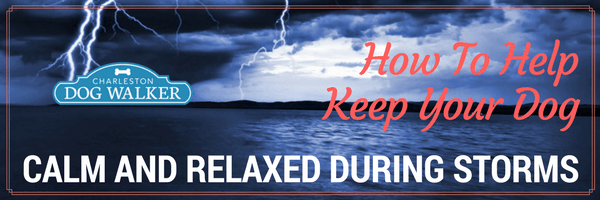 How to help keep your dog relaxed during storms