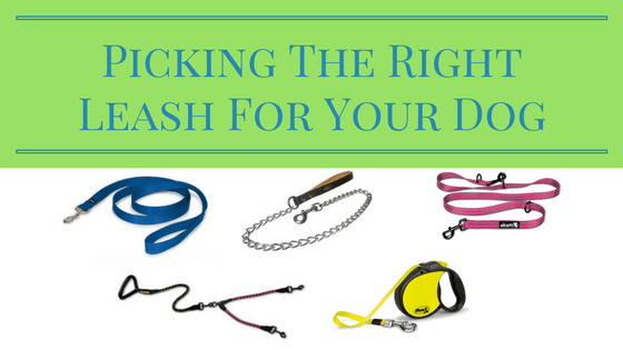 Picking The Right Leash For Your Dog