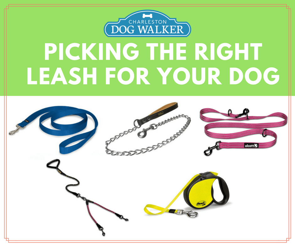 How to pick the right leash for your dog