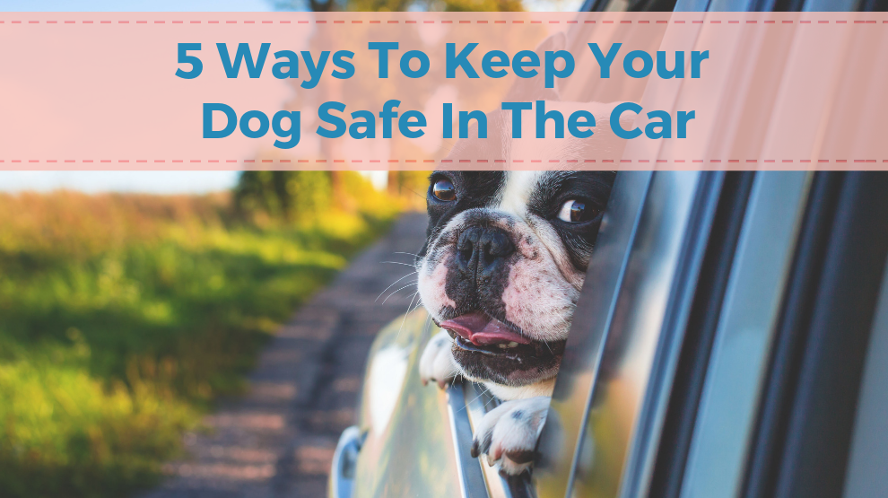 5 Ways To Keep Your Dog Safe In The Car