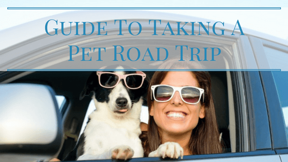 Guide To Taking A Pet Road Trip