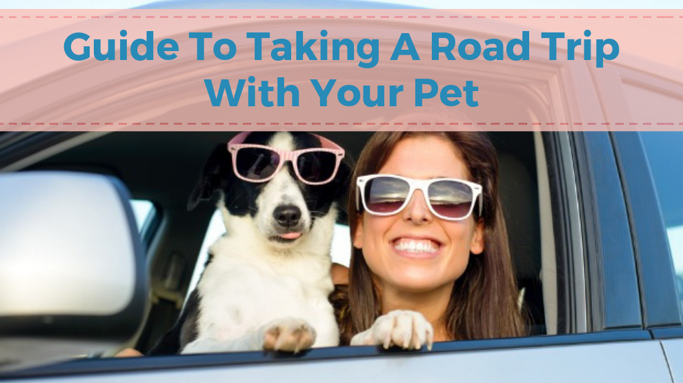 Guide To Taking A Road Trip With Your Pet
