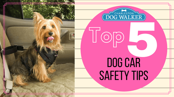Top 5 Dog Car Safety Tips