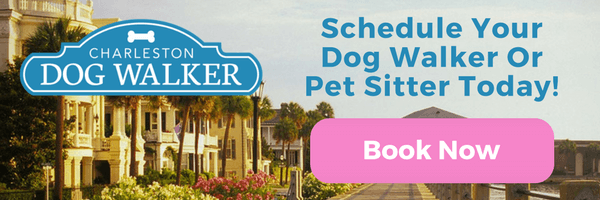 Schedule a visit with Charleston Dog Walker