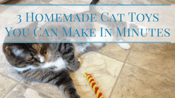 3 Homemade Cat Toys You Can Make In Minutes