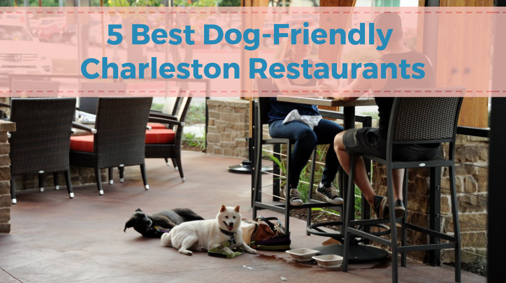 5 Best Dog-Friendly Charleston Restaurants