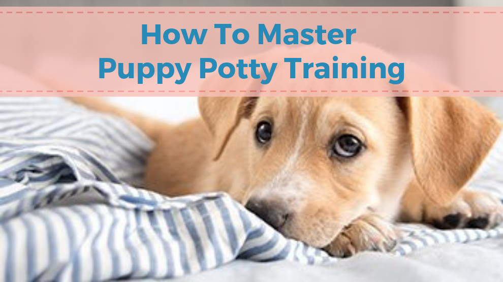 How To Master Puppy Potty Training