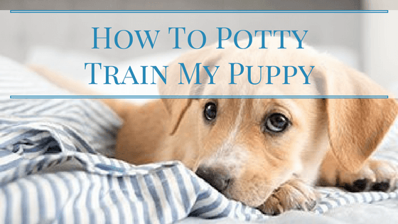 How To Potty Train My Puppy