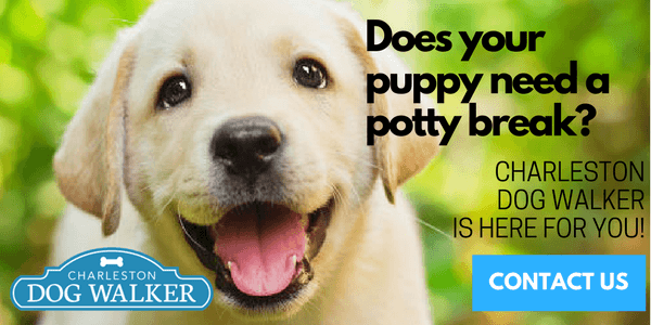 Contact Us About A Puppy Potty Break
