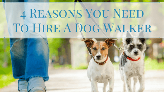 4 Reasons You Need To Hire A Dog Walker