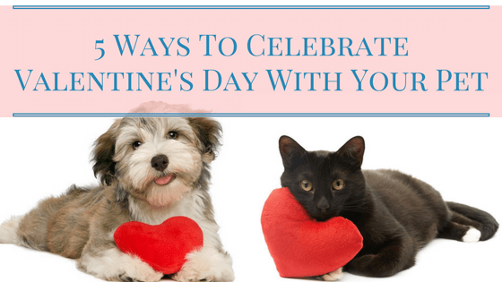Celebrate Valentine's Day With Your Pet