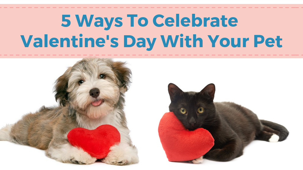 5 Ways To Celebrate Valentine's Day With Your Pet