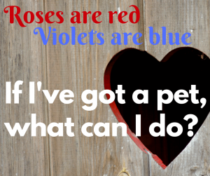 Valentine's Day with your pet