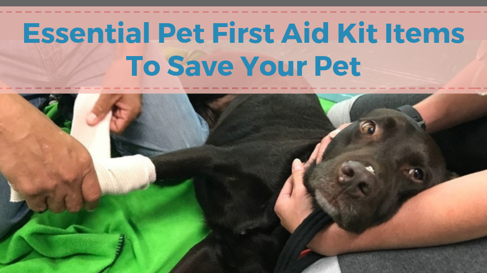 Essential Pet First Aid Kit Items To Save Your Pet