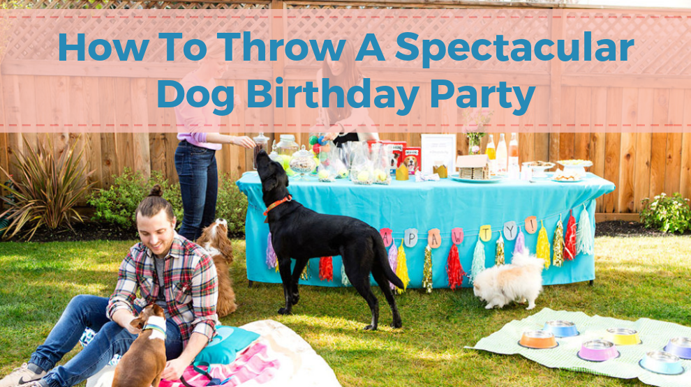 How To Throw A Spectacular Dog Birthday Party