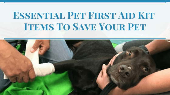Pet First Aid Kit Items To Save Your Pet