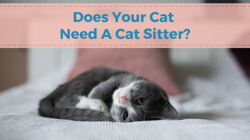Does Your Cat Need A Cat Sitter?