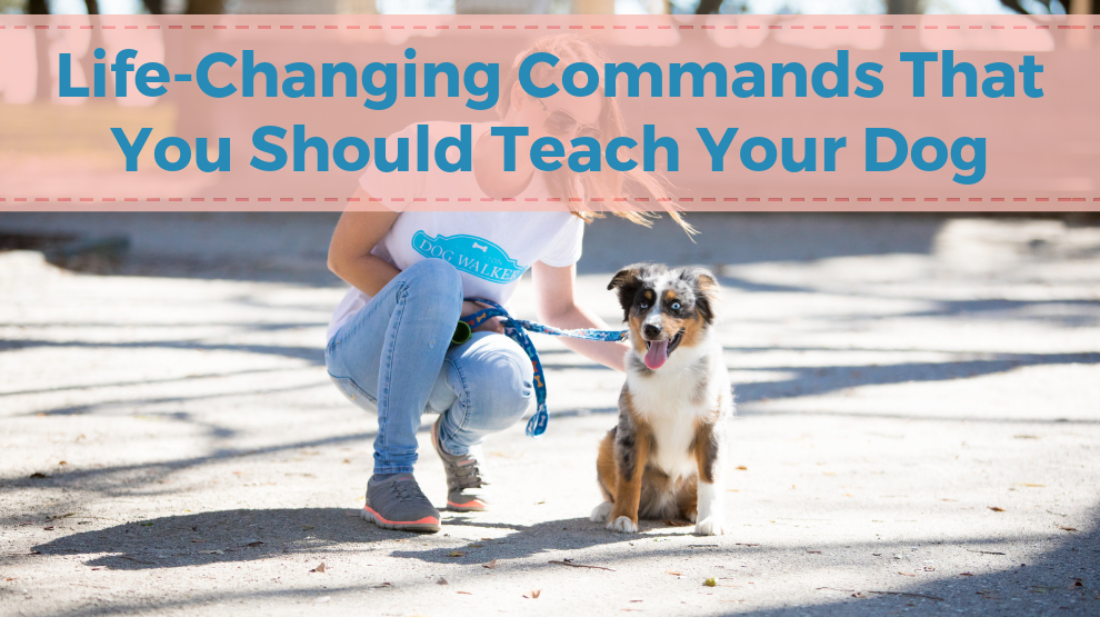 Life-Changing Commands That You Should Teach Your Dog