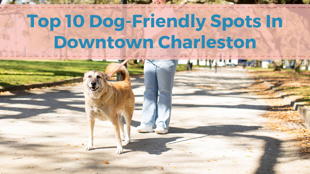 2018 Top 10 Dog-Friendly Spots In Downtown Charleston