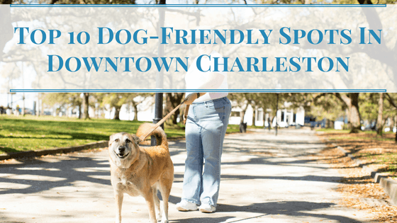 Dog-Friendly Spots In Downtown Charleston