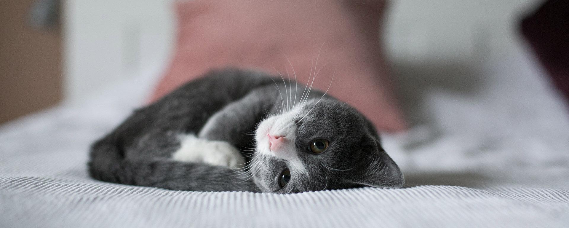 Charleston Cat Sitter