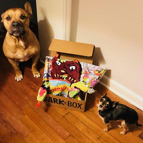 Barkbox-subscription