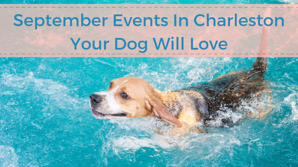 September Events In Charleston Your Dog Will Love