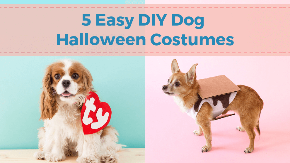 5 Easy DIY Dog Halloween Costumes