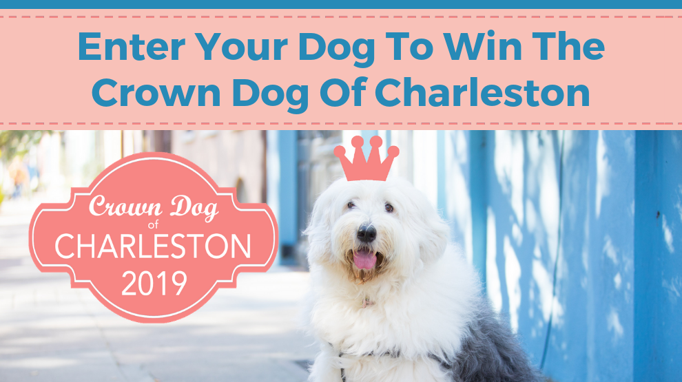 Enter Your Dog To Win The Crown Dog Of Charleston
