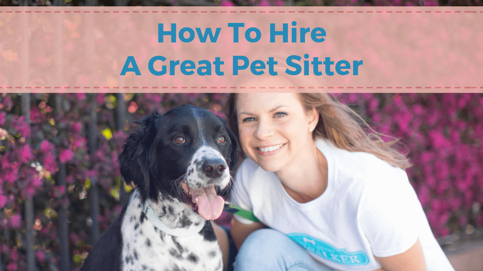 How To Hire A Great Pet Sitter