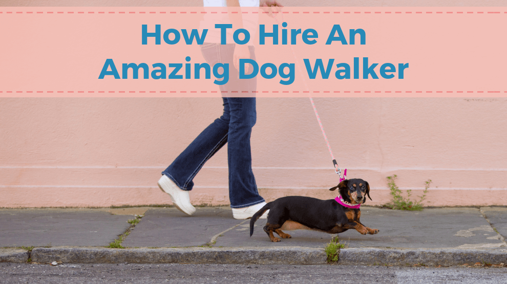 How To Hire An Amazing Dog Walker