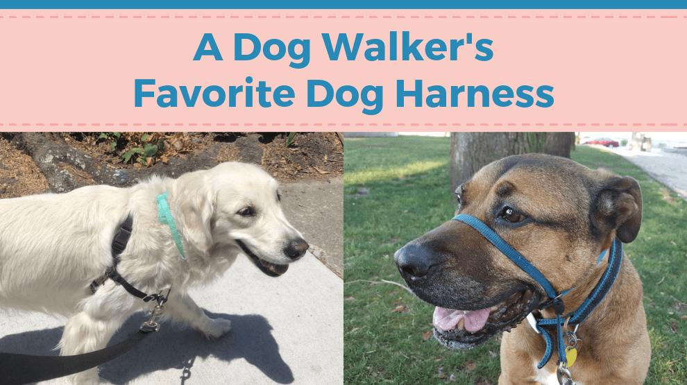 A Dog Walker's Favorite Dog Harness