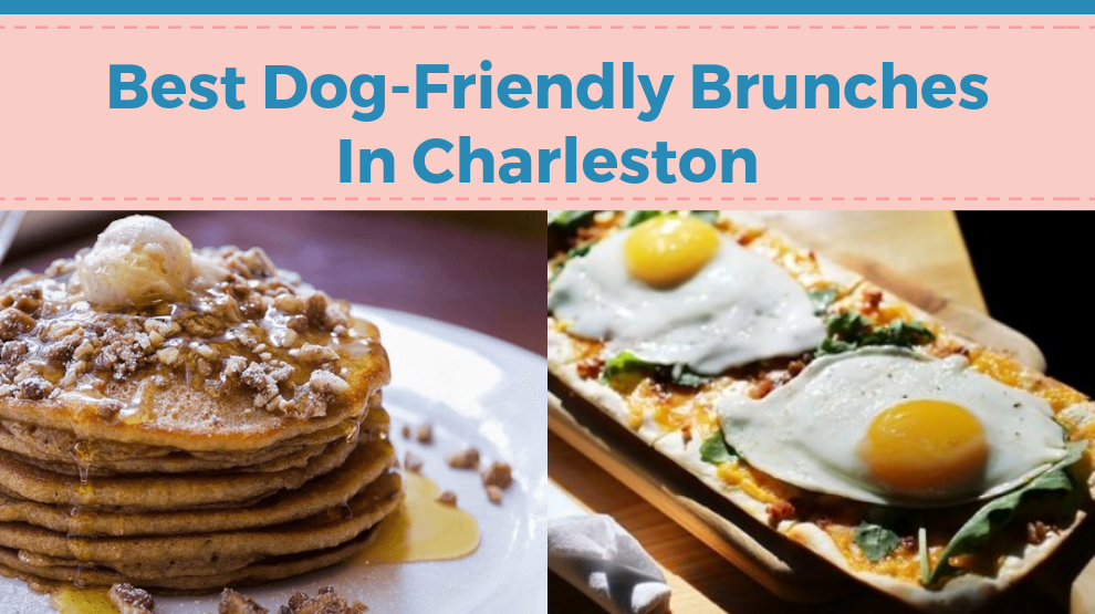 Best Dog-Friendly Brunches In Charleston