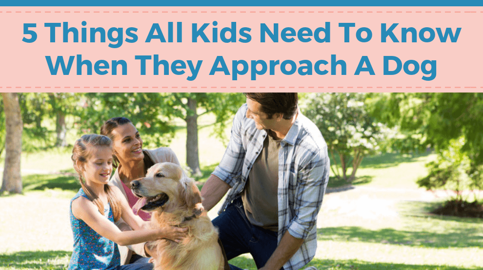 5 Things All Kids Need to Know When They Approach a Dog