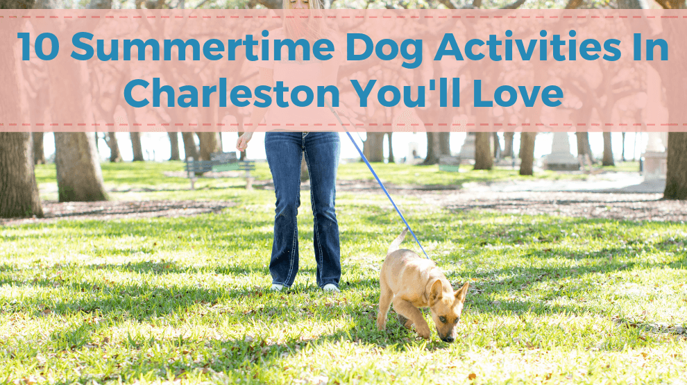 10 Summertime Dog Activities In Charleston You'll Love