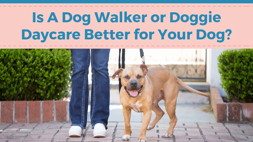 Is A Dog Walker Or Doggie Daycare Better For Your Dog?