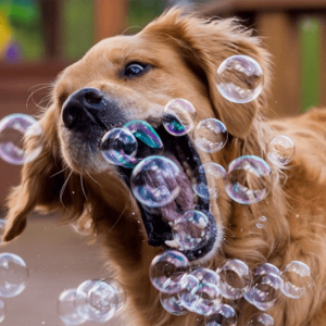 Blow bubbles for your dog