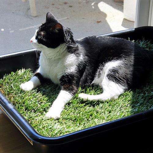 Cat Grass Lounge