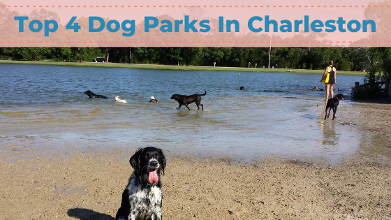Top 4 Dog Parks In Charleston