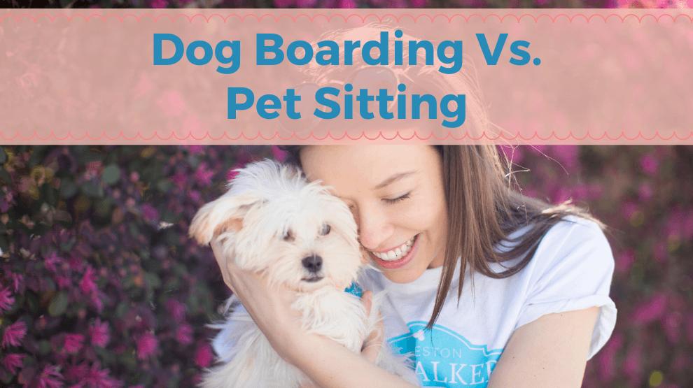 Dog Boarding Vs. Pet Sitting