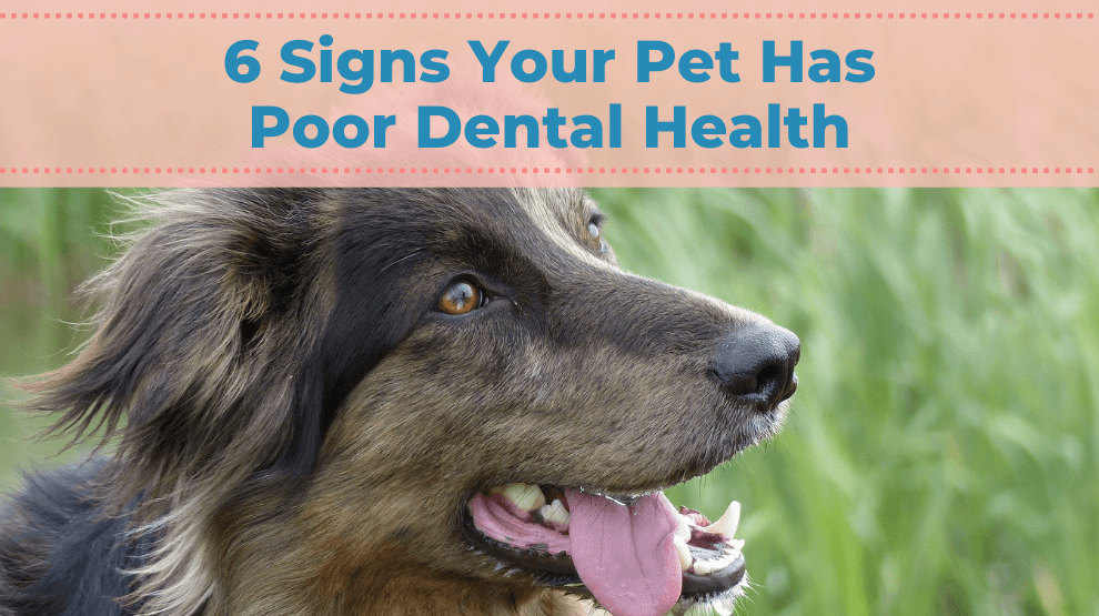 6 Signs Your Pet Has Poor Dental Health